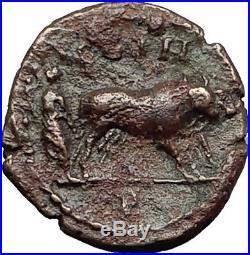 COMMODUS 188AD Parium Mysia Priest Plows Oxen RARE Ancient Roman Coin i58431